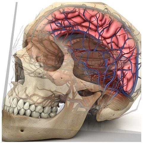 含人体器官_3D三维人体解剖系统 KAD/3DXT-高级分娩与母子急救模拟人,推拿手法 ...
